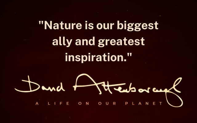 David Attenborough, A Life On Our Planet: 35 Tweetable Quotes That Will Inspire You to Make a Change
