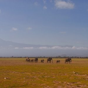 Climate Change: Where Does Africa Stand?